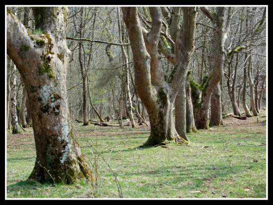 trees wood nature crookpeak mendips hills somerset somersetdreams