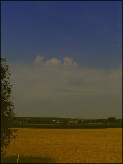 landscape rural fields gold sowing tree bush sky clouds