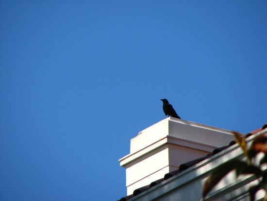 Crow watchman
