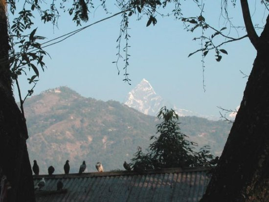 fishtail nepal pokhara birds