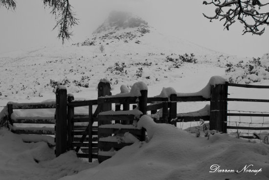 DEEP SNOW ROSEBERRY TOPPING