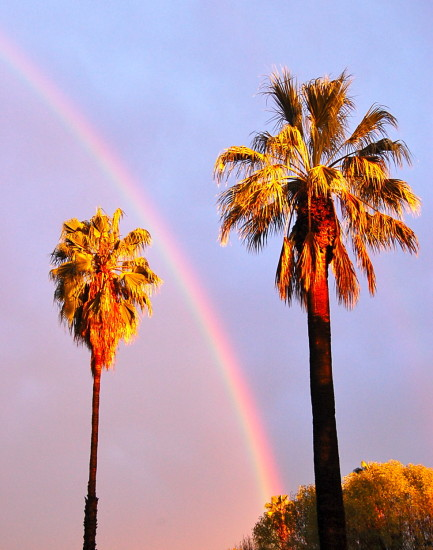 rainbow palm tree pasadena california mjghajar