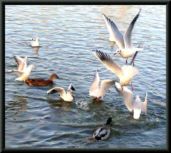 actionfriday funfriday gulls birds