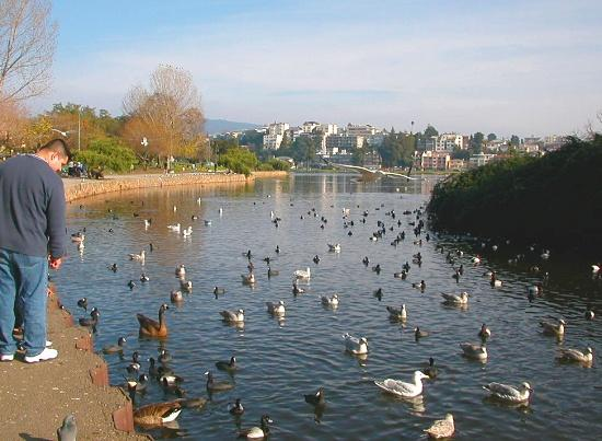 Lake Merritt and Haddon Hill