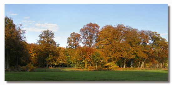 netherlands groeneveld flora tree autumn nethx groex florx treex autux viewn