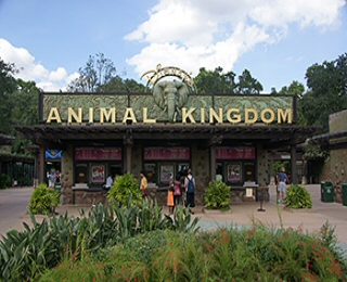 Hotels Near Animal Kingdom Orlando