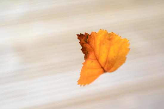 Leaf suspended in mid-air by one thread of cobweb  specially for MartinHK http://www.fotothing....