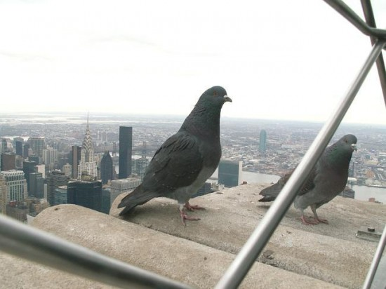 architecture newyork manhattan wildlife birds