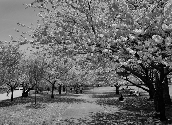 trees nature flowers park blackwhite bw