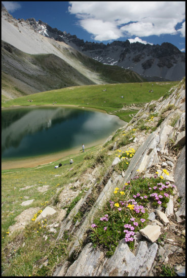 French alps Hautes Alpes Mountains Flowers CarlZeiss VarioSonnar
