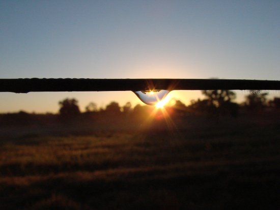reflectionthursday sunrise raindrop wire perth hills littleollie