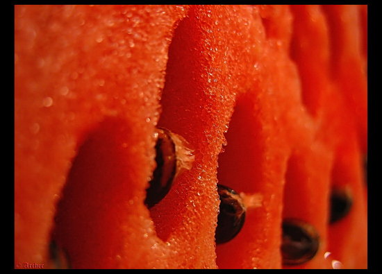 fruitfriday watermelon fruit macro archer