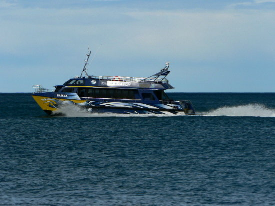 Whale watch boat photo taken from the beach while fishing at Kaikoura