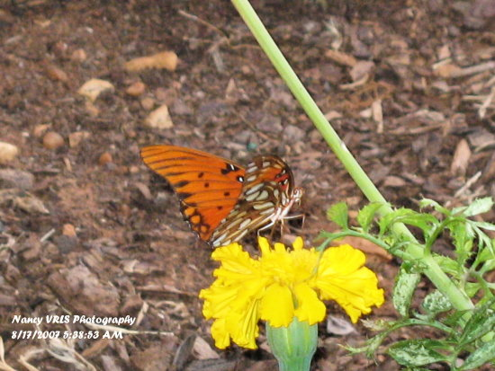If you look carefully you can tell the butterfly actually looking at the camera :)