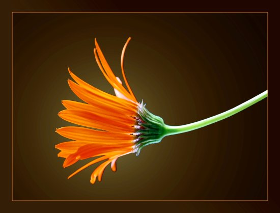 flower orange one