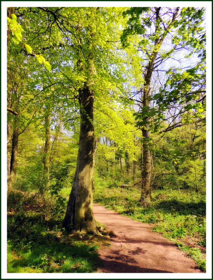 forest woodland trees