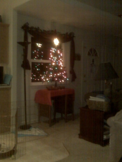 our huge xmas tree