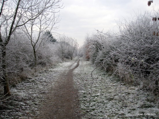 Another frosty picture