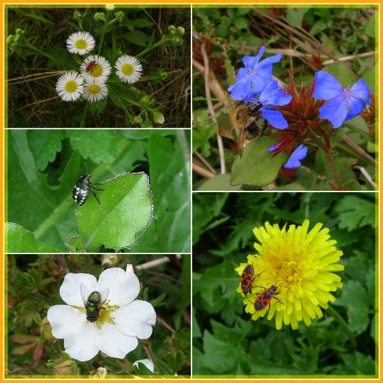 insects on flowers collage