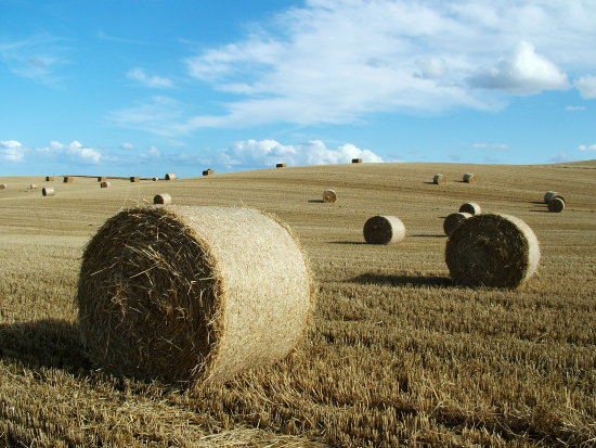 Straw Bales near St Abbs, Scotland, Late Summer 2006