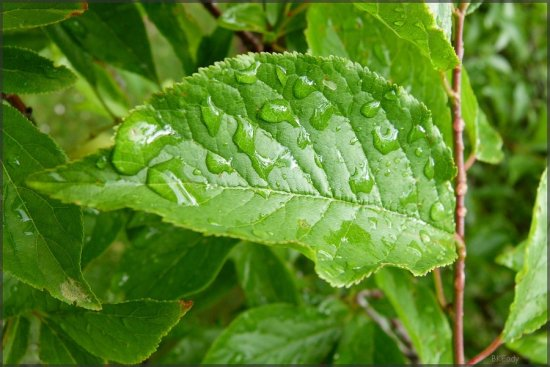 waterdrops leaf garden nature