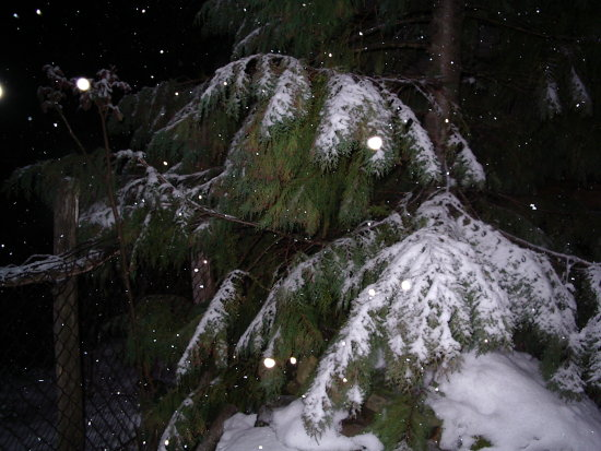 the snow falls in the night