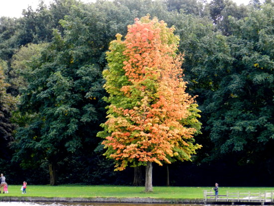 nature tree autumn