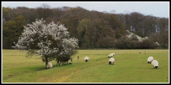 My Local Countryside 4