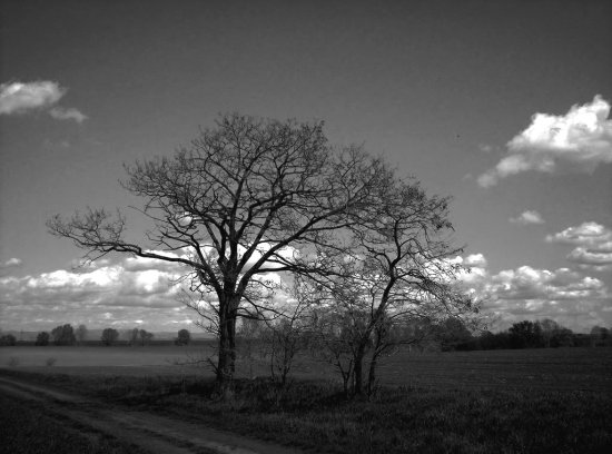 landscape nature tree field sky could before drift bw