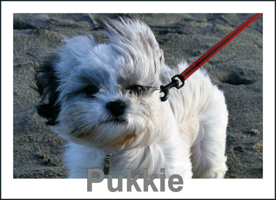 "our dog "" pukkie """