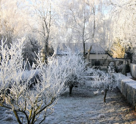 netherlands eemnes view winter frost tree nethx eemnx frostx treex