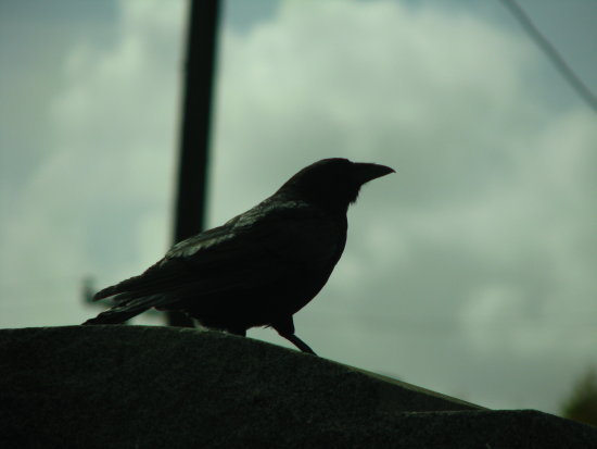 crow on head stone