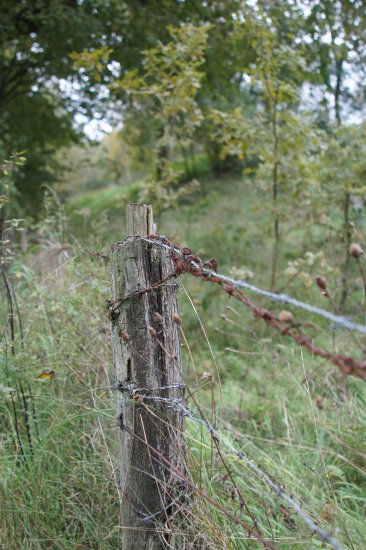 fence barbed wire border old landscape green woods forest alles