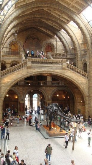 Maju Natural History Museum Dinosaur London Architecture