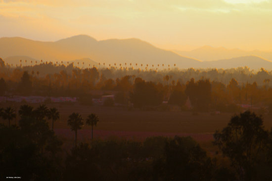 Inland Valley Hemet California Pankey Wildspirit landscape enhanced