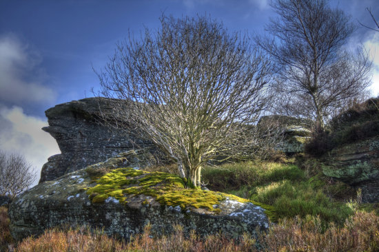 tree landscape brimham yorkshire moss yellow