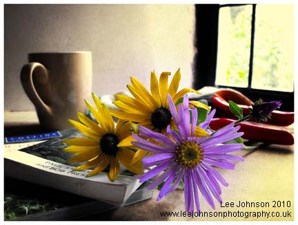 Still life flowers fine art spideyj