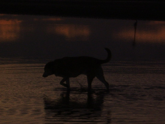 dog beah sunset