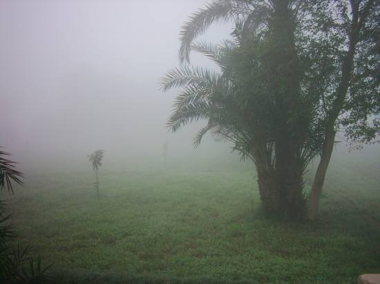 Winter Green Tree Farm Fog Travel Pakistan
