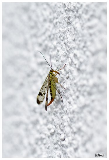 insect bug fly animal