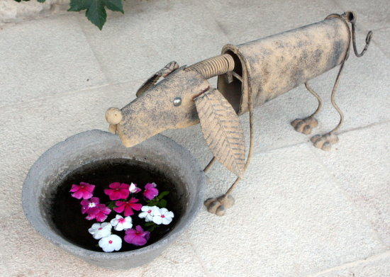 dog water pot flowers