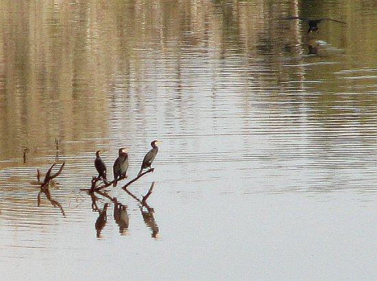 Cormorants & water (last series)