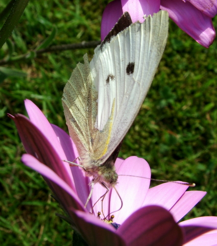 butterfly white pink flowers pretty
