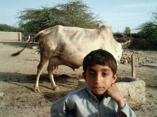 ABDUL MALIK INFRONT OF HIS GRAND MOTHER,S COW