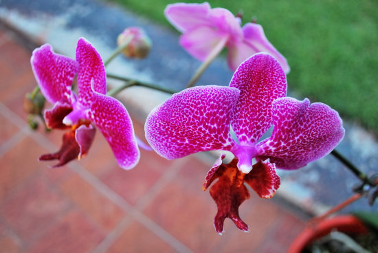orchid flower plant green environment garden home beautiful lovely