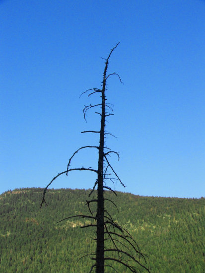 dead tree sky mountain black blue green