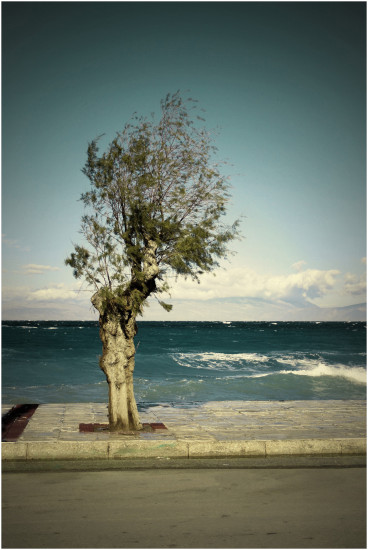 ksylokastro greece tree
