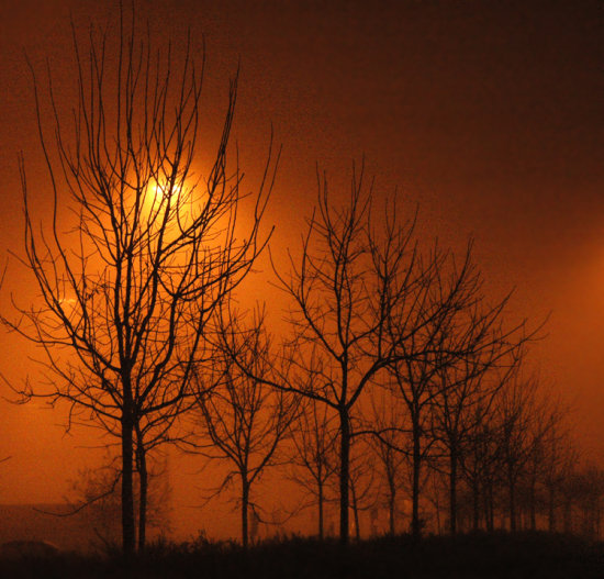 trees night light fog