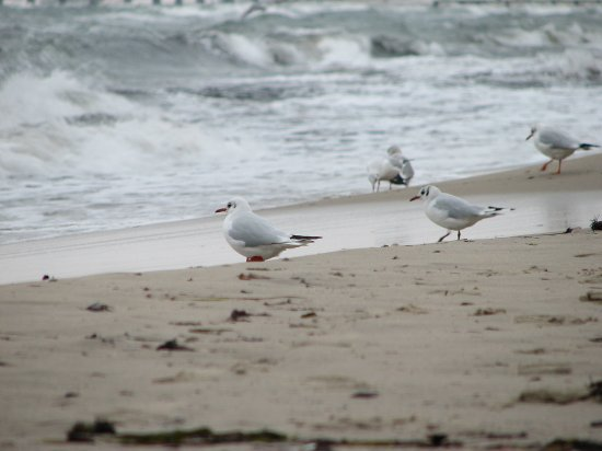 baltic sopot teracotta poland birds beach