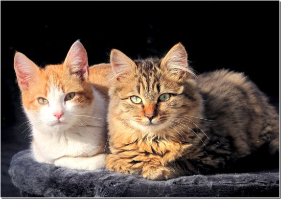 cat cats couple animals nature France